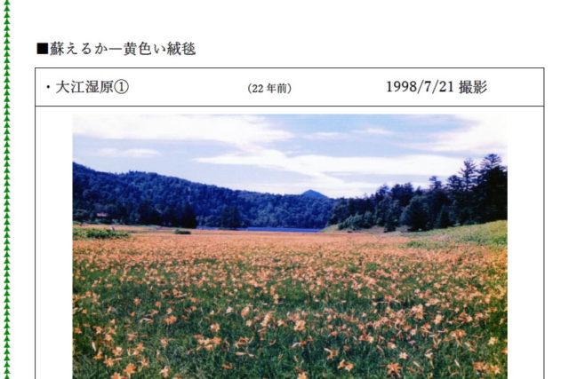 7月の尾瀬(大江湿原)
